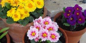 Blumen muss man pflegen, genau wie eine Homepage