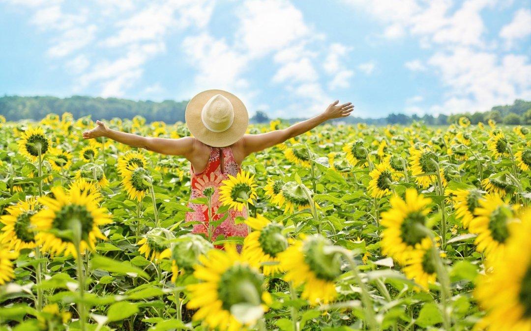 Freude Und Sonnenblumen Listing Booster