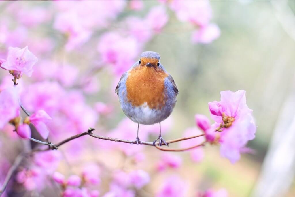 Kirschzweig Mit Vogel