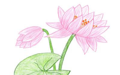 floristweb-Stream
