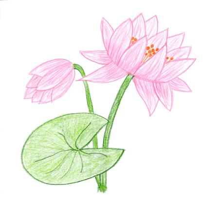 Automatische Bildoptimierung bei floristweb