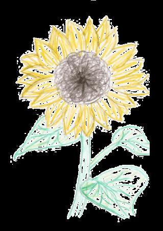 Sonnenblume: Ihre professionelle Kontakt-Seite