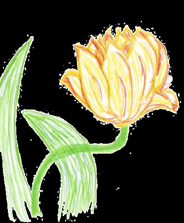 Tulpe: Ihr SEO-Paket 1